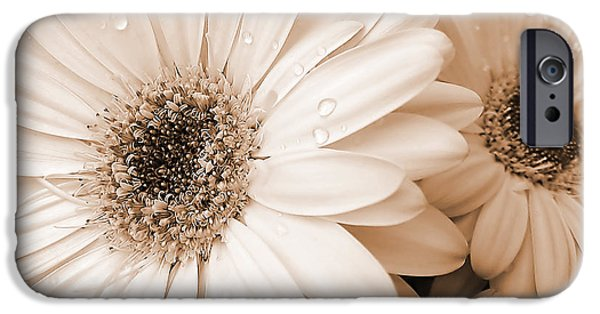 Daisy iPhone Cases - Sepia Gerber Daisy Flowers iPhone Case by Jennie Marie Schell