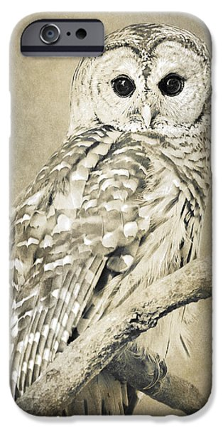 Barred Owl iPhone Cases - Sepia Owl iPhone Case by Christina Rollo