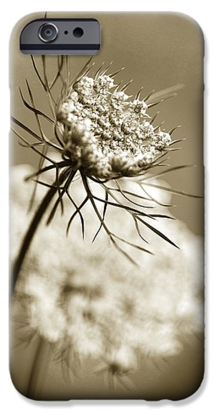 Sepia Flowers iPhone Cases - Sepia Wildflower Art iPhone Case by Christina Rollo
