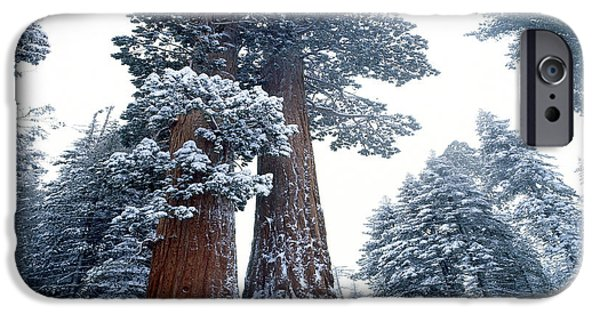Snow iPhone Cases - Sequoia Winter iPhone Case by Jim Zuckerman