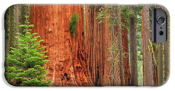 Solitude Photographs iPhone Cases - Sequoias iPhone Case by Inge Johnsson