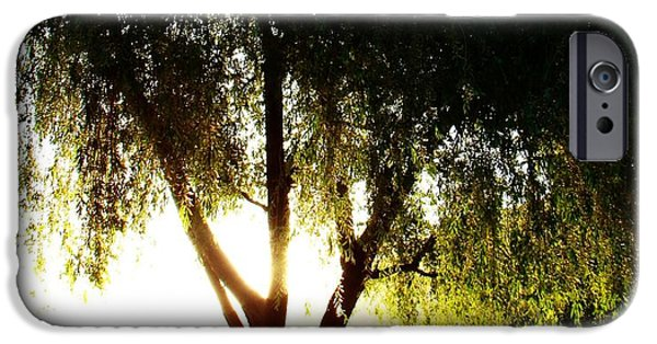 Willow Lake iPhone Cases - Sacred Tree iPhone Case by David and Mandy
