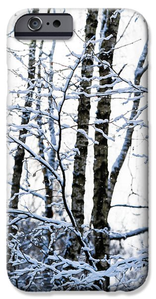 Wintertime iPhone Cases - Serenity - Featured 3 iPhone Case by Alexander Senin