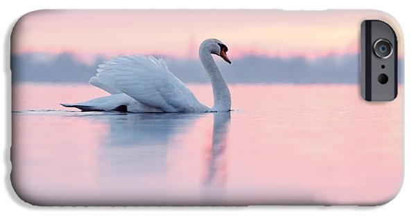 Swans... iPhone Cases - Serenity   Mute Swan at Sunset iPhone Case by Roeselien Raimond