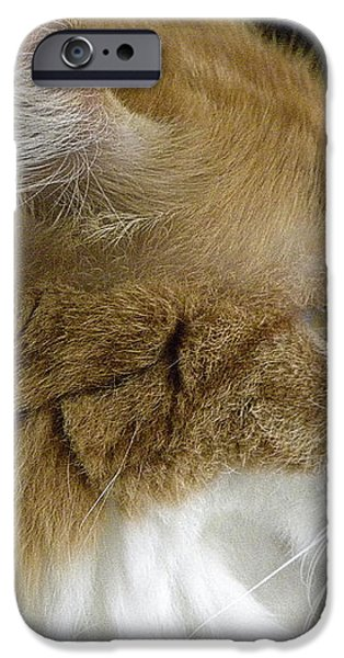 Serious Gato 2 iPhone Case by Julie Palencia