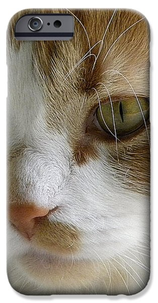Serious Gato 3 iPhone Case by Julie Palencia