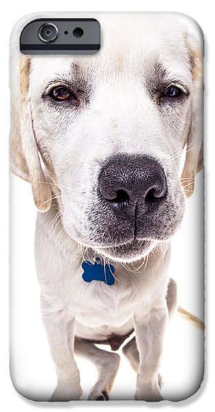 Pet Photography iPhone Cases - Seriously? iPhone Case by Diane Diederich