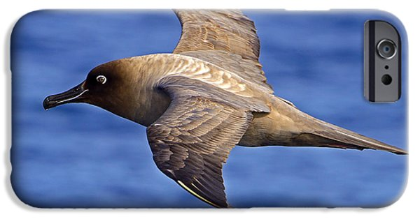 Albatross iPhone Cases - Service with a Smile iPhone Case by Tony Beck