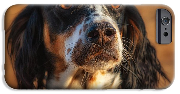 Setter Pointer iPhone Cases - Setter Heaven iPhone Case by Reflections Afield Photography - Steve Hill