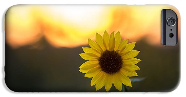 Temecula iPhone Cases - Setting Sun Flower iPhone Case by Peter Tellone