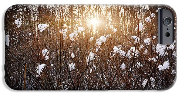 Snowy Evening iPhone Cases - Setting sun in winter forest iPhone Case by Elena Elisseeva