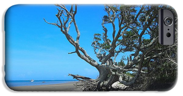 Recently Sold -  - Cemetary iPhone Cases - Shackleford Banks Tree 2 iPhone Case by Cathy Lindsey