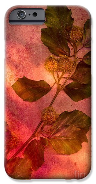 Dappled Light Photographs iPhone Cases - Shades of Autumn iPhone Case by Jan Bickerton