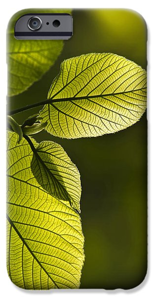 Nature Abstract iPhone Cases - Shades Of Green iPhone Case by Christina Rollo