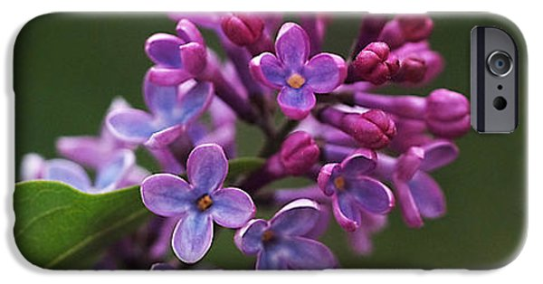 Love Photographs iPhone Cases - Shades of Lilac  iPhone Case by Rona Black