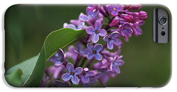 Blue Flowers iPhone Cases - Shades of Lilac  iPhone Case by Rona Black