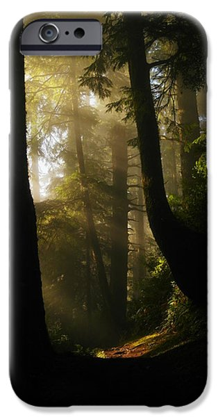 Pines iPhone Cases - Shadow Dreams iPhone Case by Jeff  Swan