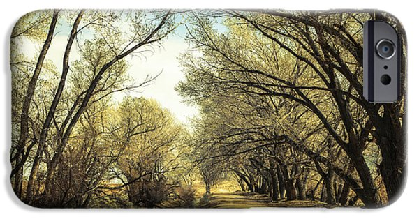 Overhang iPhone Cases - Shady Path iPhone Case by Michele Cornelius