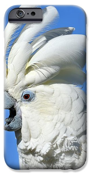 Cockatoo iPhone Cases - Shady Umbrella iPhone Case by Tony Beck