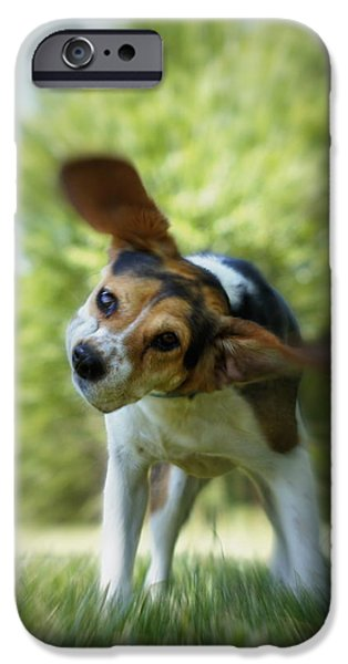 Beagles iPhone Cases - Shake Shake Shake iPhone Case by Cricket Hackmann