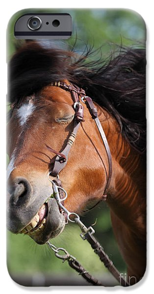 Animals Photographs iPhone Cases - Shake The Body iPhone Case by Jana Behr