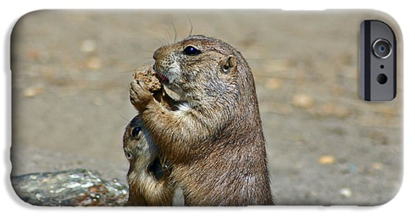 Prairie Dogs iPhone Cases - Sharing iPhone Case by David Rucker