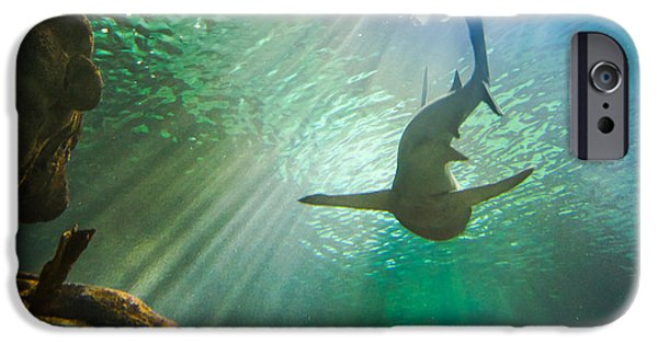 Moa iPhone Cases - Shark Tank iPhone Case by Bill Pevlor