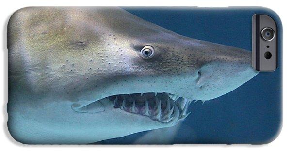 Shark iPhone Cases - Shark Teeth 3121 iPhone Case by Jack Schultz
