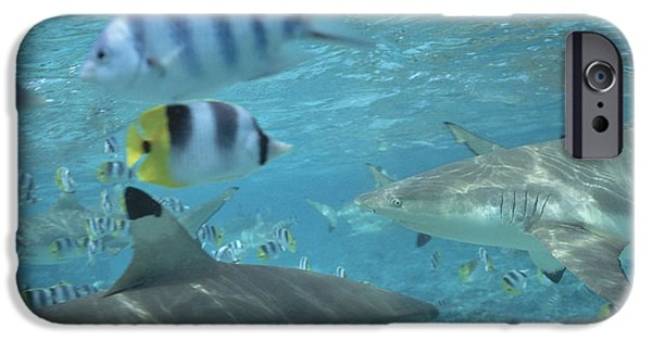 Shark iPhone Cases - Sharks iPhone Case by Art Wolfe