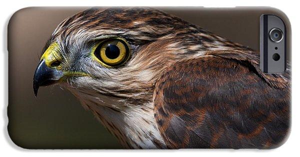 Birds iPhone Cases - Sharp-shinned Hawk.. iPhone Case by Nina Stavlund