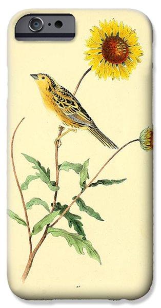 Botanical Drawings iPhone Cases - Sharp-Tailed Bunting iPhone Case by John James Audubon