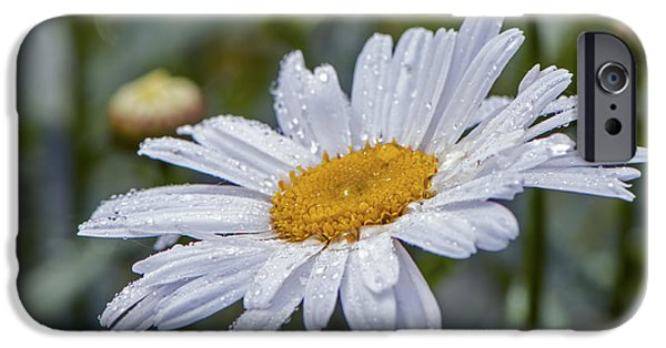 Wet Petals iPhone Cases - Shasta Daisy with Waterdrops iPhone Case by Sharon  Talson