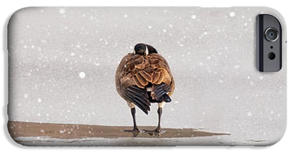 Wintertime iPhone Cases - Shawnee Park Geese iPhone Case by Timothy Flanigan and Debbie Flanigan Nature Exposure