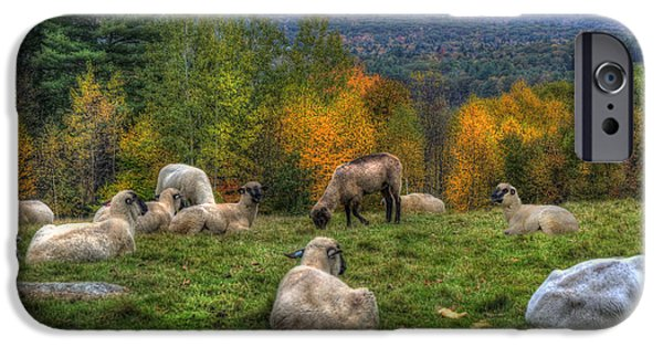 New Hampshire Fall Scenes iPhone Cases - Sheep Grazing on Mountain  iPhone Case by Joann Vitali