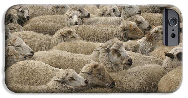 Chimborazo iPhone Cases - Sheep Herd Chimborazo Ecuador iPhone Case by Pete Oxford
