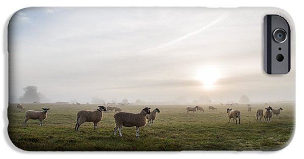 Fog Mist iPhone Cases - Sheep in a misty field at sunrise iPhone Case by Aimee Bracken