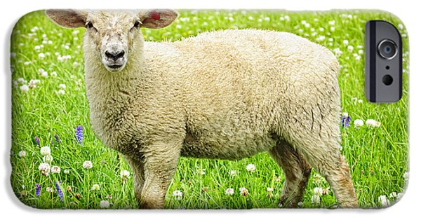 One iPhone Cases - Sheep in summer meadow iPhone Case by Elena Elisseeva