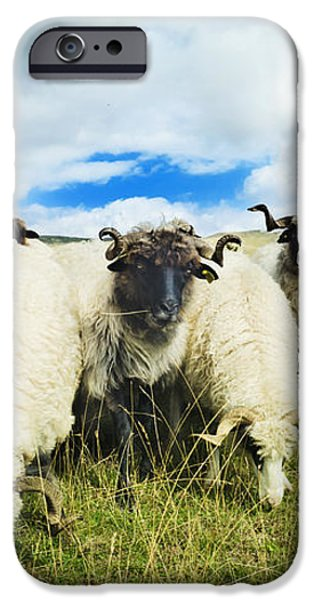Sheep in the field iPhone Case by Jelena Jovanovic