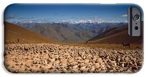 Mountain iPhone Cases - Sheep Otago New Zealand iPhone Case by Panoramic Images
