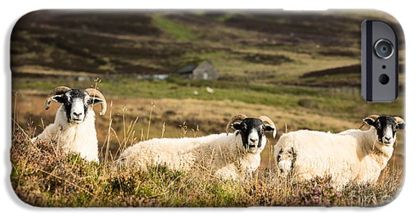 Trio Photographs iPhone Cases - Sheep trio iPhone Case by Jane Rix