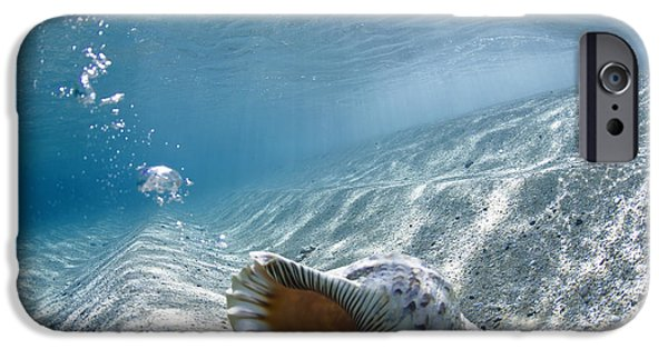 Ocean Art Photography iPhone Cases - Shell burp iPhone Case by Sean Davey