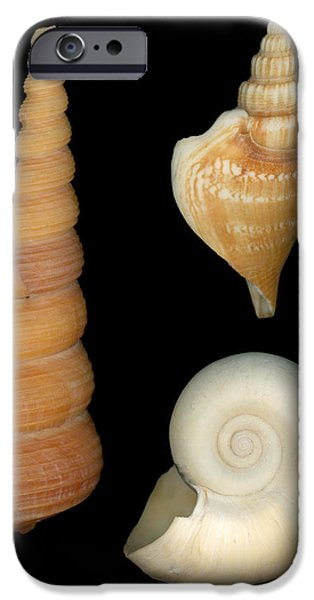 Scanography iPhone Cases - Shell - Conchology - Shells iPhone Case by Mike Savad