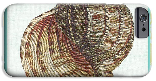 House Art iPhone Cases - Shell Finds-C iPhone Case by Jean Plout
