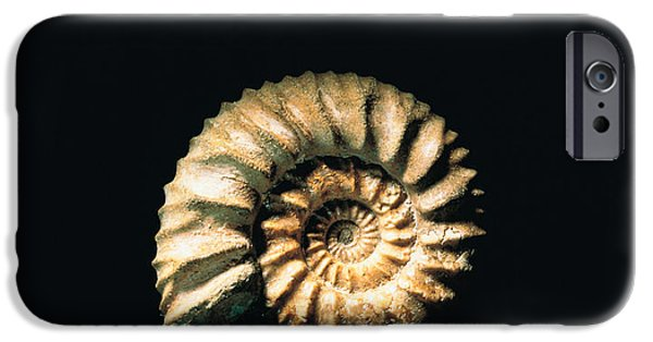 Cut-outs iPhone Cases - Shell On Black Background iPhone Case by Panoramic Images