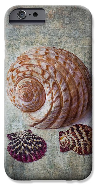 Shell Texture iPhone Cases - Shell Texture iPhone Case by Garry Gay