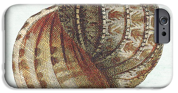 House Art iPhone Cases - Shell Treasure-C iPhone Case by Jean Plout