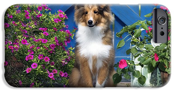 Indiana Flowers iPhone Cases - Sheltie - D001280 iPhone Case by Daniel Dempster
