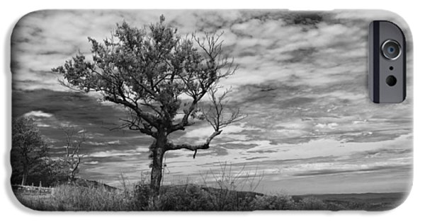 Forest iPhone Cases - Shenandoah National Park 16554b iPhone Case by Guy Whiteley