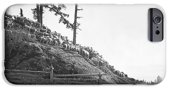 Grazing Sheep iPhone Cases - SHEPHERD and SHEEP 1893 iPhone Case by Daniel Hagerman