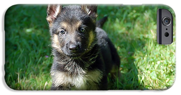 Puppies iPhone Cases - Shepherd Pups 14 iPhone Case by Aimee L Maher Photography and Art